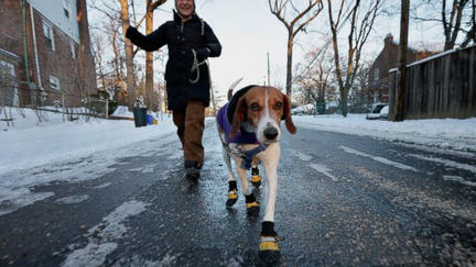 Gear Up for Winter Dog Walking